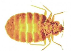 Bed Bug Control Hemsworth