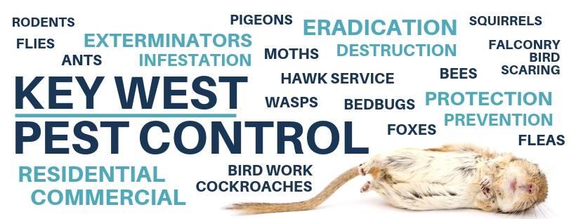 Pest exterminator leeds